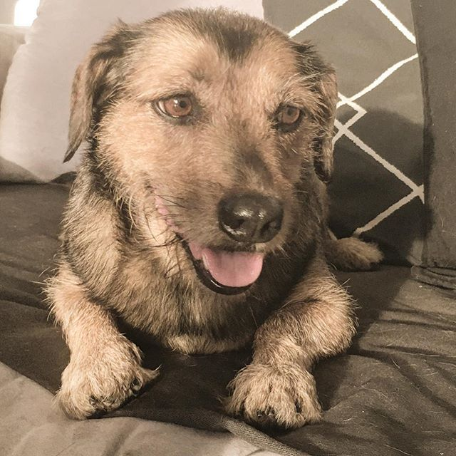 Trockenhund